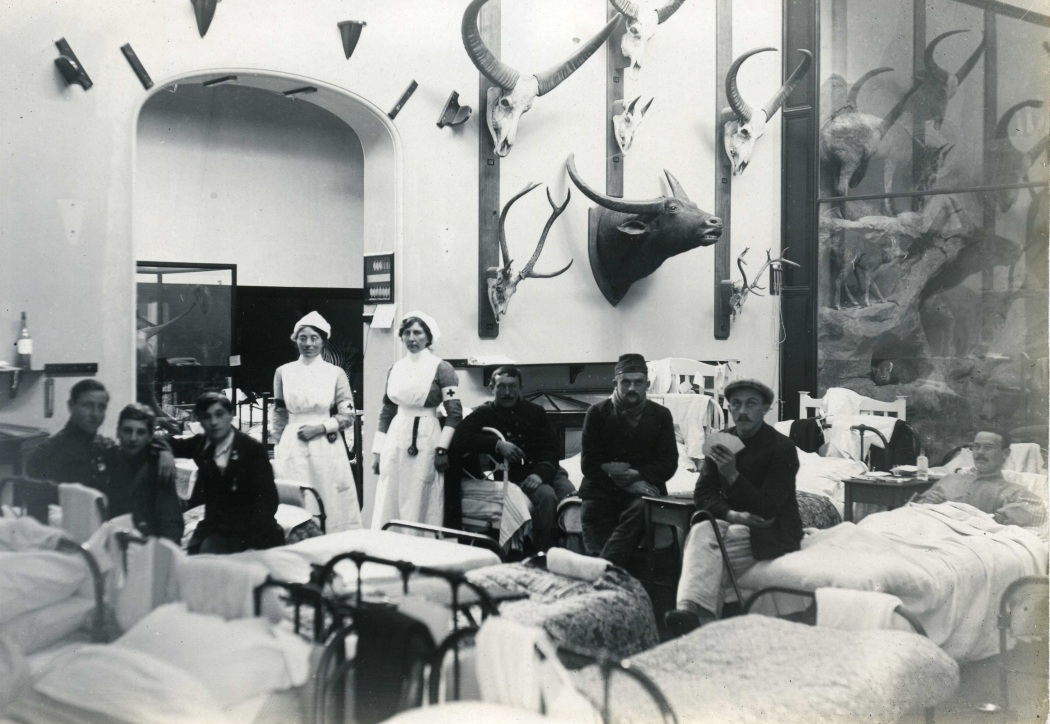 Internal Groups 1914 001 Museum Ward- Rowland Ward to Hospital Ward exhibition.